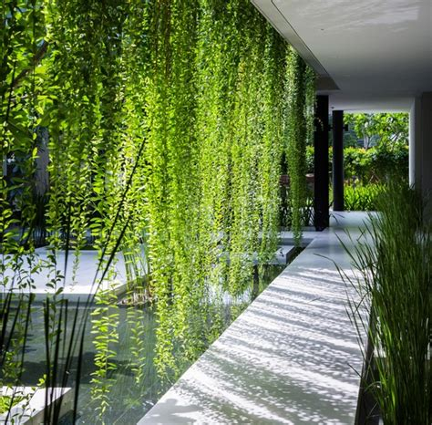 Pros And Cons Of Gardening Wallclimbing Plants For Houses