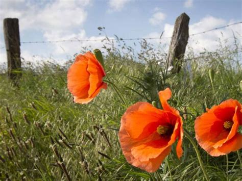earth day crafts 25 best ideas about remembrance poppy on 1914