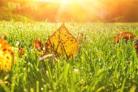 Was Der Rasen Im Herbst Braucht