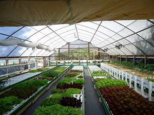 4 Things To Consider When Planning Your First Aquaponics