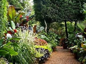 des plantes exotiques rustiques pour votre jardin blog With idee de plantation pour jardin 0 jardin exotique jardin pinterest photos et photos