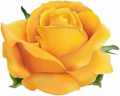 Yellow Rose Clip Transparent Clipart Roses Yopriceville