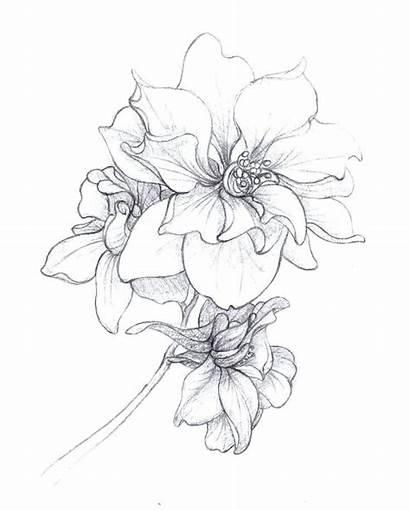 Birth Flower Flowers Tattoo Larkspur July Tattoos