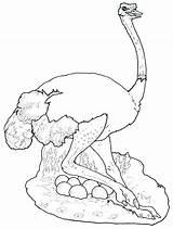 Ostrich Coloring Eggs Hide Printable Lion Getcolorings Mural sketch template