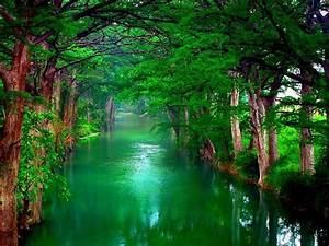 Nature, Trees, Wallpaper, 2560x1600, 28782, Wallpapers13, Com