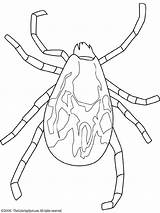 Tick Coloring Pages Colouring Rodent Embroidery Lightupyourbrain sketch template