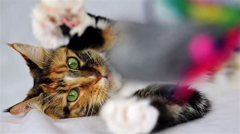 【猫】 ねこ! きれいな壁紙 【1920×1080】
