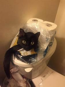 14 photos pleines d humour qui montrent que les chats nous