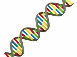 Pin Dna Model Candy on Pinterest