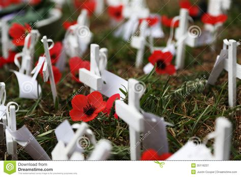 anzac day poppies royalty  stock photography image