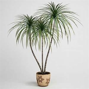Pflanze Für Dunkle Räume : zimmerpflanzen f r dunkle r ume geeignet zimmerpflanzen ~ A.2002-acura-tl-radio.info Haus und Dekorationen