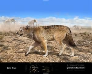 Canis Dirus Dire Wolf