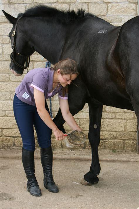 essential care  horses hoofs blue cross