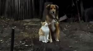 A True Love Story Between A Dog And A Cat