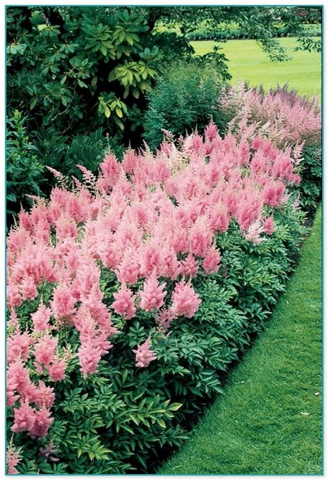 flowers that flower all year cold hardy flowering plants