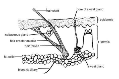 anatomy  physiology  animalslearning design
