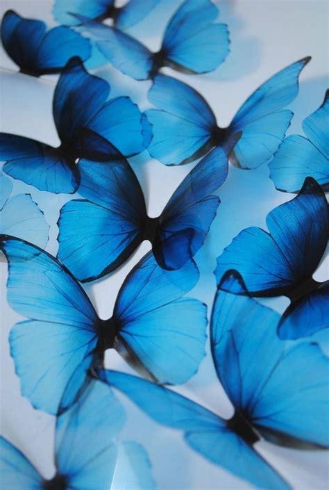 pin by angelareyes on blue in 2020 blue butterfly