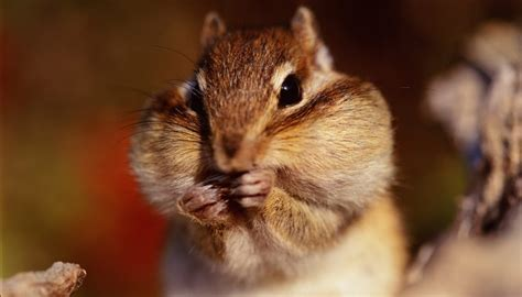 what types of foods do squirrels eat sciencing