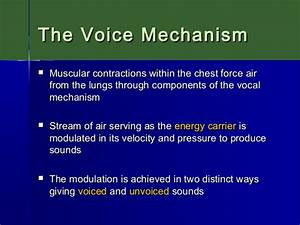 Acoustics Of Speech  The Voice Mechanism