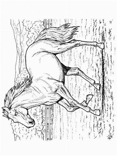Coloring Horse Pferde Ausmalbilder Paarden Kleurplaten Malvorlagen