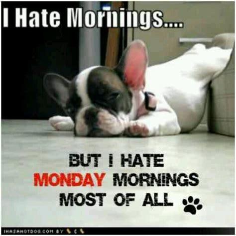 I Hate Mondays Meme - i hate mornings true dat pinterest
