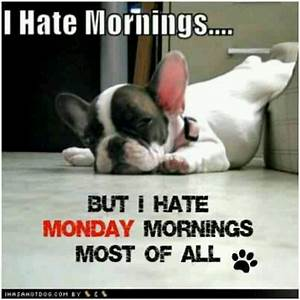 I hate mornings | True dat | Pinterest