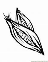 Corn Coloring Stalk Popular sketch template