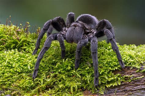 The World's Most Poisonous Spiders