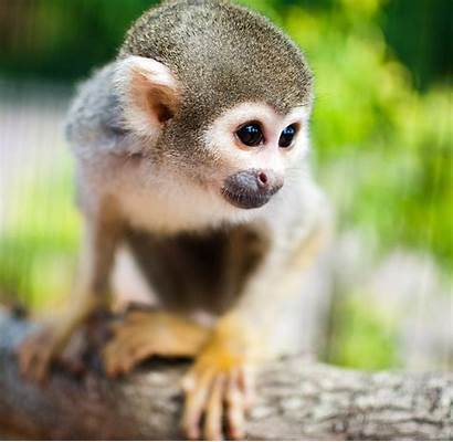 Exotic Zoo Petting Monkeys Okinawa Botanical Gardens