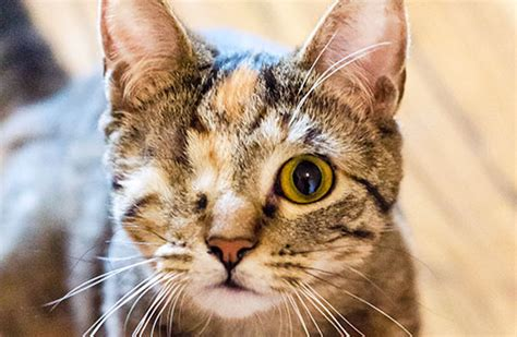 Can You Shower A Cat - cat grooming tips aspca