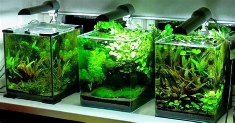betta fish nano aquascaping  suited  plakats