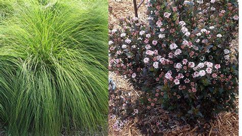 wisconsin nursery  landscape association names  plant   year selections nursery