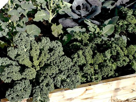 top ten winter vegetables   home garden portland