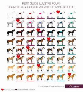 bien choisir la couleur de son equipement fouganza With quelle couleur va avec le gris 1 quelle couleur dequipement pour un cheval gris