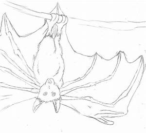 Fruit Bat Drawing