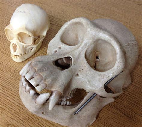 biological anthropology anthropology university