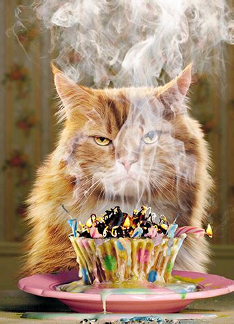 cat  burning birthday cake claws  paws cards