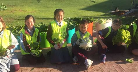 sustainability st marks anglican community school