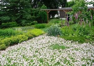 Pflanzen Im Mai : bodendeckende stauden geranien funkien ~ Buech-reservation.com Haus und Dekorationen