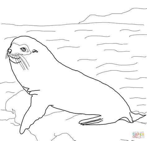 Galapagos Fur Seal Coloring Page Free Printable Coloring