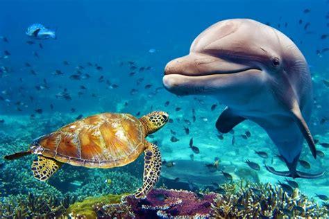 Animals Underwater Sea Life Fish Dolphin Turtle Jzk200