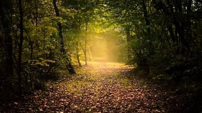 Forest Autumn Fog Path Background 1080p Foliage