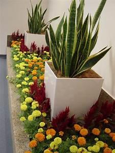 Indoor Adhoc Flowers with Potted Plants - Groen Gardens ...