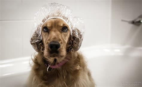 Reducing Shedding In Dogs by Tips To Reduce Shedding