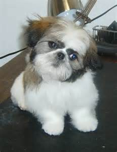 groomers bbs cutest other than your own you groom