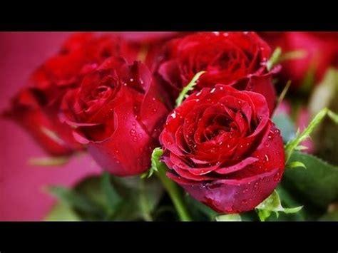 foto di fiori belli miosotis le piante e i fiori pi 249 belli