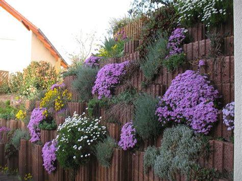 pflanzen für steinmauer mauer aus pflanzk 252 beln begr 252 nen mein sch 246 ner garten forum