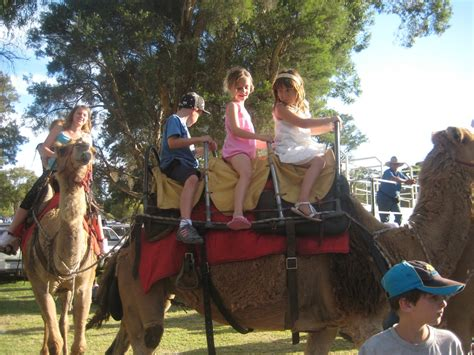 Dwane's blog: Early wake up for the sunrise camel riding