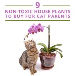 poisonous plants for cats 9 non toxic house plants to buy for cat parents