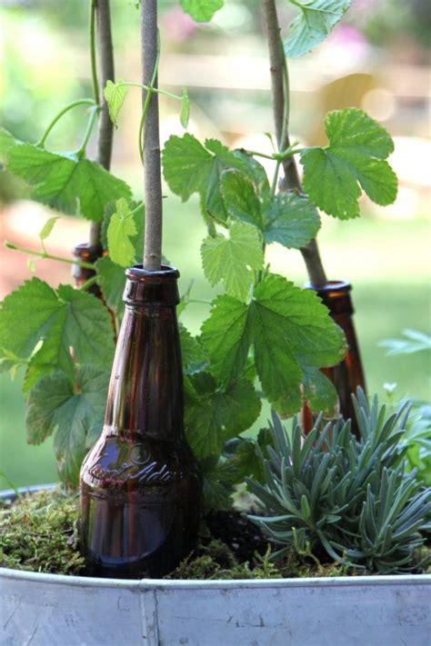 plant  beer garden hgtv